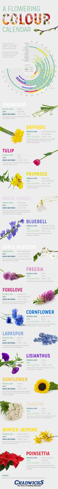Want a garden that blooms all season long? Use this chart as your starting point.