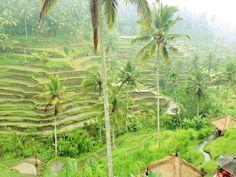 Hello rice terraces