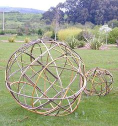A few of these Willow Spheres out in the back pasture.