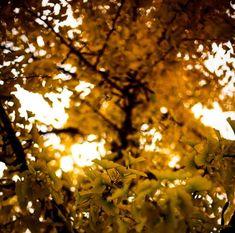 Arbre de Ginkgo Autumn Inspiration, Fruit, Etsy, Handmade Gifts