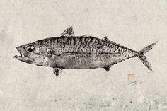 Mackerel by dowaito