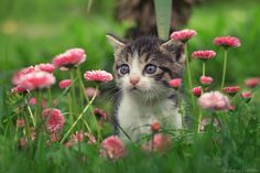 """Furry florist - - Female kitten called Kiki. - Some of my tips for taking cat photos: <a href=""""http://iso.500px.com/cat-photography-tips/""""> 21 Tips For Taking Incredible Cat Photos </a>  - All news, info, updates, links, more photos you can find on my <a href=""""http://www.facebook.com/pages/Zoran-Milutinovic-Photography/132671676818324?sk=wall""""> Facebook Fan Page </a> and if you want to support me just hit """"LIKE"""" - Contact Email: milutinovic_zoran@ymail.com"""