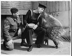 English sailor share a nut with a porcupine in London Zoo (1940) chococrispis