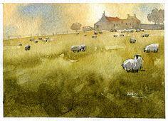 Scots Sheep 1 by Iain Stewart Watercolor ~ 5 x 7