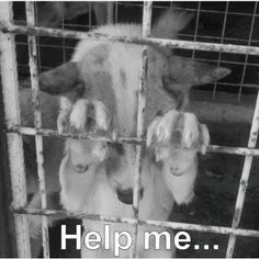 Please........  don't #buy a #pet, #adopt!!!