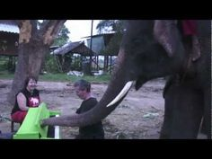 Video--Peter the Elephant plays a Green Piano.  Elephant's are highly intellegent and believed 2nd to man.  They cry real tears.
