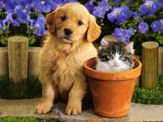 cute cat and dog friendship