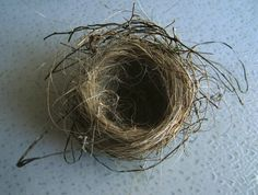 I love having bird nests throughout my home