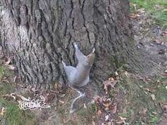 Drunk Squirrel!