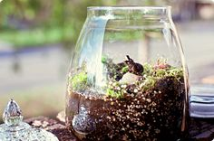 terrarium... really want to finally do this.