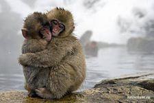 Одна жизнь – одна любовь? Читать далее:http://inness2312.blogspot.ru/2015/01/blog-post_10.html#links