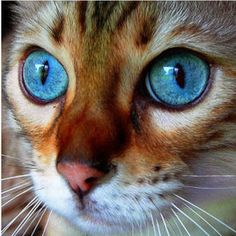 Wow! Look at the eyes on this cat. Awesome!