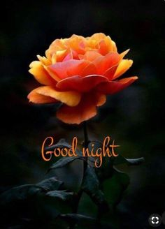 Good night images for Whatsapp group - Images Of DP Good Night Flowers, Romantic Good Night, Good Night I Love You, Good Night Friends, Good Night Messages, Good Night Wishes, Good Night Sweet Dreams, Good Night Image, Good Night Quotes