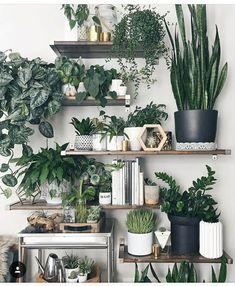 Je muur helemaal vol met planken en planten? Waarom niet. Meer tips en inspiratie? Kijk op debotanist.nl/inspiratie