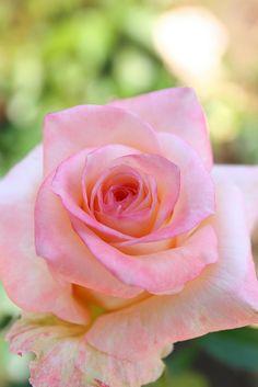 Glorious fresh cut g Beautiful gorgeous pretty flowers