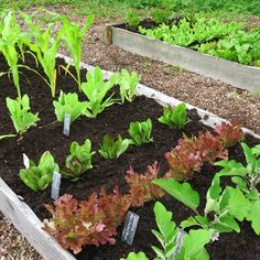 Container gardening, more collections fabulous gardening suggestions, pin number 1661942338 Small Vegetable Gardens, Vegetable Garden For Beginners, Starting A Vegetable Garden, Veg Garden, Vegetable Gardening, Organic Gardening, Gardening Books, Garden Paths, Planting Vegetables