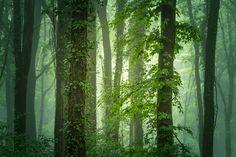 Walking in the misty forest