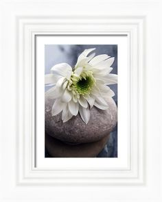 Flower Framed Print featuring the photograph White Blossom On Rocks by Linda Woods