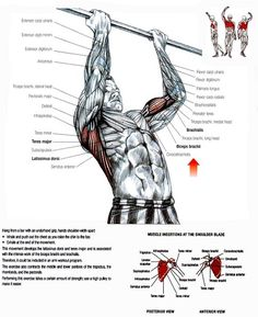 Pull-ups, chin-ups. Bodyweight workouts. Calisthenics. Muscle groups  #bodyweight #workouts #exercise #pullups #chinups #calisthenics