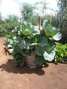 Огород в мешке по-африкански