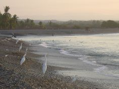 Petacalco, la playa