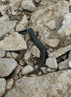 Foto zgodba 7: Pod Kamniškim sedlom je Gregor naletel na črnega močerada. Avtor: Gregor Ulčar