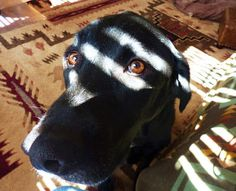 """Chapter 45 - The Book of Barkley - """"Talking to Dog""""."""