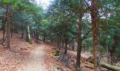 Elvarázsolt erdő a Bakonyban - Szentgáli tiszafás - kiránduló Country Roads