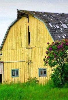 They call me Mellow Yellow. Country Barns, Country Life, Country Living, Country Roads, Country Cottages, Country Charm, Farm Barn, Old Farm, Barn Pictures