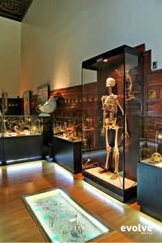 Museum of Man exhibition design by claudia mihalache, via Behance