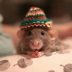 The rat in the hat.....that's the way the story was written but Dr. Seuss thought it would scare the straights and changed it !