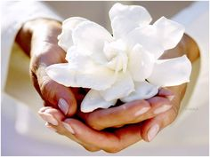 https://www.facebook.com/432873026824162/photos/t.100000323160155/521331517978312/?type=1   Wenn du loslässt, hast du zwei Hände frei.  Aber ich lasse nix los, wenn es mir was bedeutet. — mit Victor Ashton hier: Neverland.