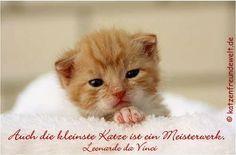 Viele süße Zitate über Katzen.