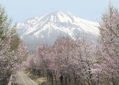東北・夢の桜街道 復興への祈りを捧げる 桜の札所・八十八ヵ所巡り