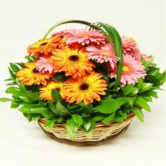 Arreglo Floral Toloache, material: Canasta con 24 gerberas. - Medidas: altura: 40 cm ancho: 40 cm http://www.toloachefloral.com/index.php/arreglos-florales/cumple-envia-flores/cum16.html