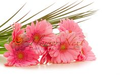 Send Flowers To SaudiArabia To increase The Hapiness Of  Your Loved Ones