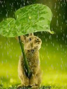 Good Morning Friends, Good Morning Quotes, Viernes Gif, Panda Wallpapers, Emoji Love, Morning Blessings, Today Quotes, Galaxy Wallpaper, Rain Drops