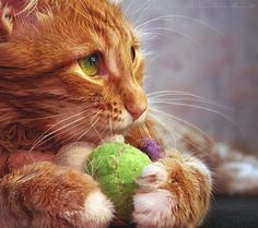 This is mine and you're not going to get it............