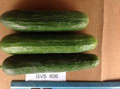 GVS 606 Persian Cucumber, Trials, Vegetables, Food, Essen, Vegetable Recipes, Meals, Yemek, Veggies