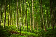 Ten magiczny, górski las istnieje naprawdę i to w...Beskidach!