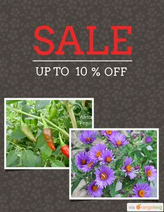 10% OFF on select products. Hurry, sale ending soon! Check out our discounted products now: https://orangetwig.com/shops/AAAibxW/campaigns/AABufU4?cb=2015012&sn=CaribbeanGarden&ch=pin&crid=AABue0N