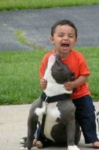 "Pits were once nicknamed ""the nanny breed"" because of how great they are with kids!"