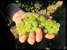 Seven Springs Vineyard Pictures Of The Sun, Love Pictures, South African Wine, Seven Springs, Wineries, Vineyard, Fruit, Wine Cellars, Vine Yard