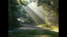 """Peaceful Music, Relaxing Music, Instrumental Music """"Pine Covered Path"""" by Tim Janis - YouTube"""