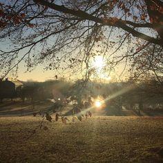 Morning sunshine at University Park @uniofnottingham @uonsustainability
