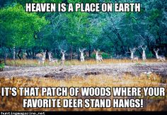 Heaven on Earth - Hunting Meme - It's that patch of woods where your favorite deer stand hangs.