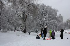 Colors in Central Park Central Park, Explore, Colors, Outdoor, Outdoors, Colour, Outdoor Games, The Great Outdoors, Color