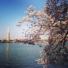 If you've never been to DC before, you might want to time your visit to the cherry blossoms. The Tidal Basin's cherry blossom trees (gifted to DC from Toyko) bloom into cotton candy-colored tufts every year as March turns into April, and they attract hordes of visitors. You can enjoy the blossoms by walking along the Tidal Basin, paddle boating inside the basin or taking a cruise. But there are also other events associated with the festival, including a 10K, fireworks, concerts and more.