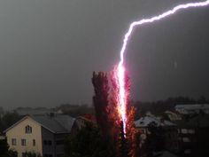LightningHitsTree