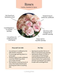 Garden rose, standard rose, or spray rose flower care.  Simple care tips to keep your DIY wedding flowers looking fresh! Flower Moxie provides simple recipes, florist-grade wholesale flowers, easy tutorials, and HUGE SAVINGS on wedding flowers. Shop our large selection of DIY wedding flower packages and bulk wedding flowers packages for your DIY wedding! Bulk Wedding Flowers, Wedding Flower Packages, Diy Wedding Bouquet, Diy Bouquet, Floral Wedding, Bouquets, Types Of Flowers, Diy Flowers, Standard Roses